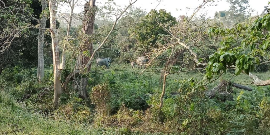 Elephant family during jeep safari in Central Range (Kohora)