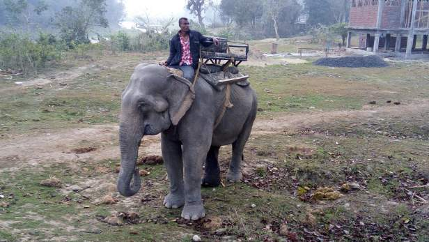 Elephant ready for Safari@ Western Range