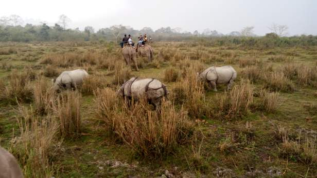 Exciting watching group of rhinos