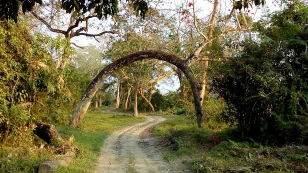 Beautiful landscape @ Kaziranga
