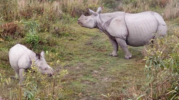 Cute Baby and mumma rhino during elephant safari
